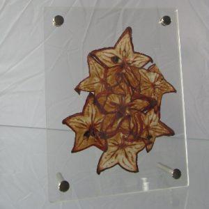 Star Fruit Papyrus – Mounted